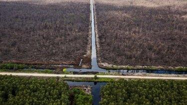 Deforestation on Pandang Island.