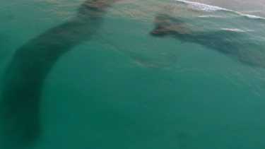 "Drone pictures show massive ""clouds"" of bait fish on Broome's Cable Beach."