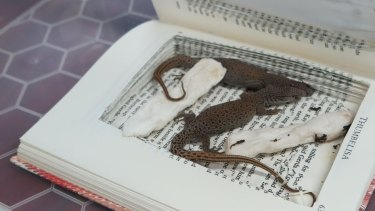Hollowed-out books are also used to transport illegally trafficked animals.
