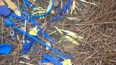 """Our"" bower bird ramps up the action with yellow cockatoo feathers."