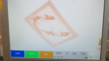 Illegally traded reptiles are often intercepted by X-ray.