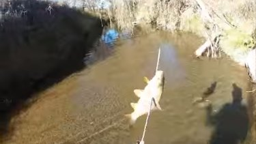 Academics, environmental groups and politicians are alarmed at the carp bow fishing trial.