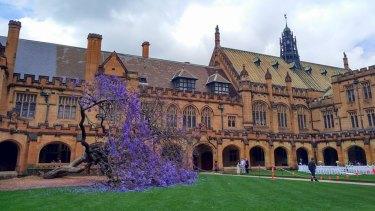 The jacaranda tree at Sydney University collapsed nine months ago.
