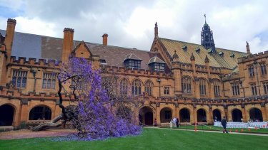 The fallen jacaranda tree at the University of Sydney.
