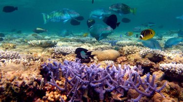Researchers find ways that may help coral reefs recover from climate change impacts.