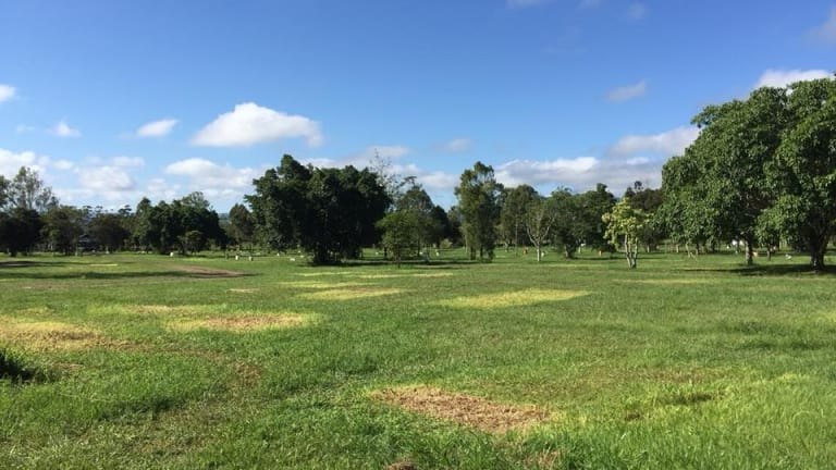 The Woodford Folk Festival campsite after patrons left.