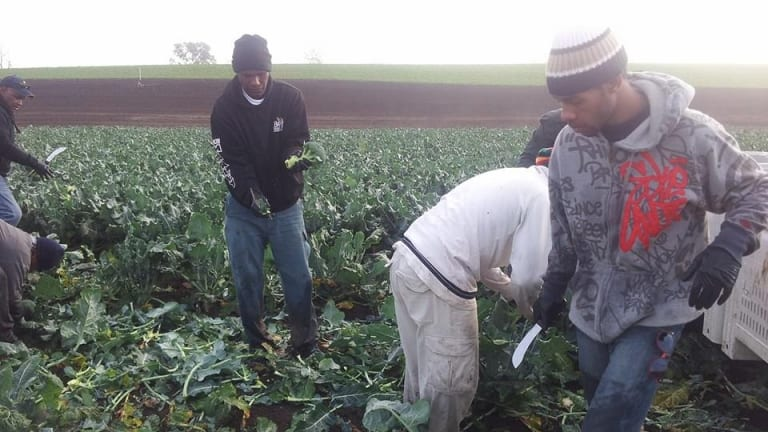 Seasonal workers from Vanuatu who were exploited on Queensland farms.