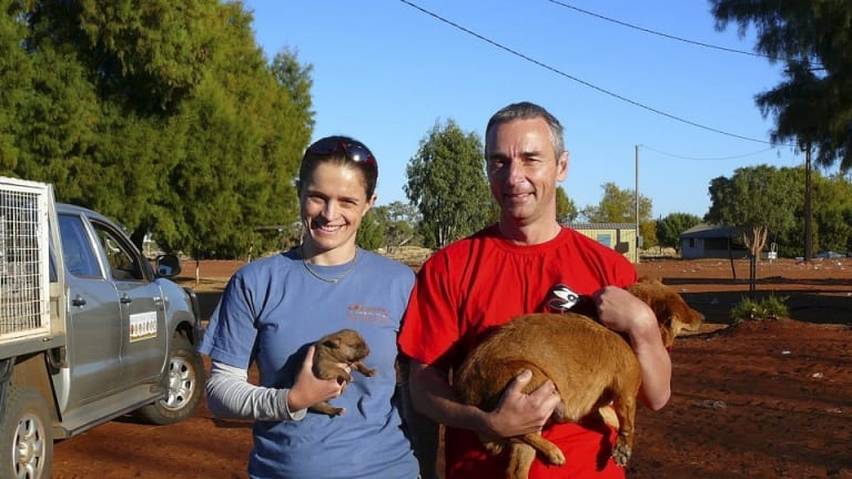 Vets Alison Taylor and Michael Archinal work in remote Australian communities.