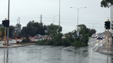 A fallen tree blocks East Parade in Perth.
