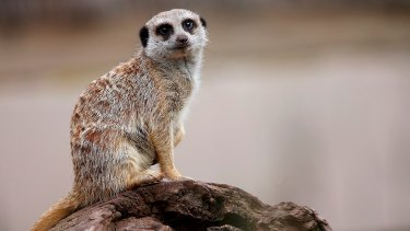 Animal spirits are Australia's missing link.