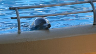 A dolphin at the Dolphin Marine Magic park.