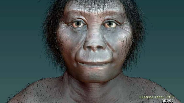 """An artist's impression of Homo floresiensis based on recent research. Dubbed a human """"hobbit"""", the species of humanoid was about a metre tall and died out about 54,000 years ago."""