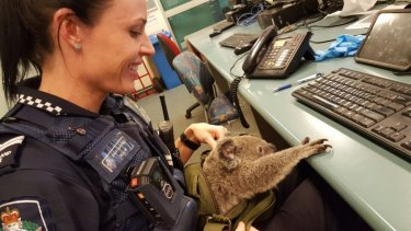 The koala was a hit back at the station.