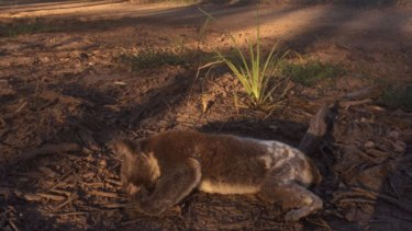 The impacts of land clearing for new residential estates revealed in statistics for animal hospitals in South Queensland.