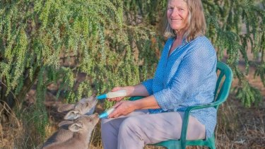 WIRES founder Mikla Lewis feeds kangaroo joeys at her property in Grenfell.