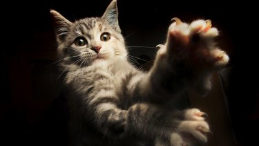 Cat owners predict a drop in domestic pet numbers.