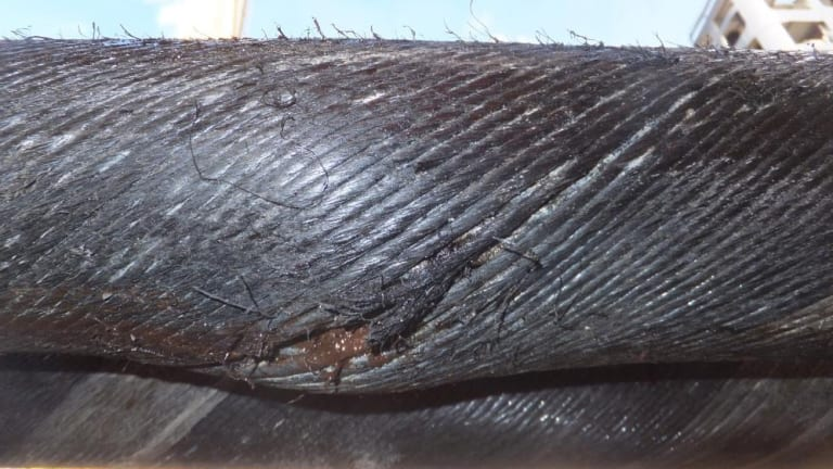 The tear in the 12-centimetre-thick  Basslink cable that has sent Tasmania into an electricity emergency.