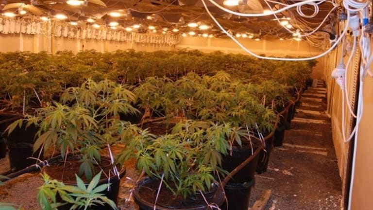 Going green: Police say there could be as many as 1500 crop houses operating in Victoria.