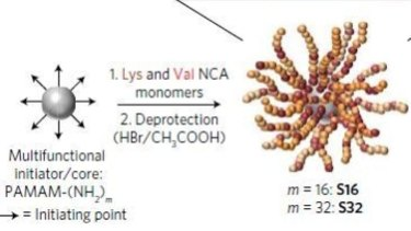 The star-shaped peptide polymers - chains of amino acids - have been designed with 16 or 32 arms.