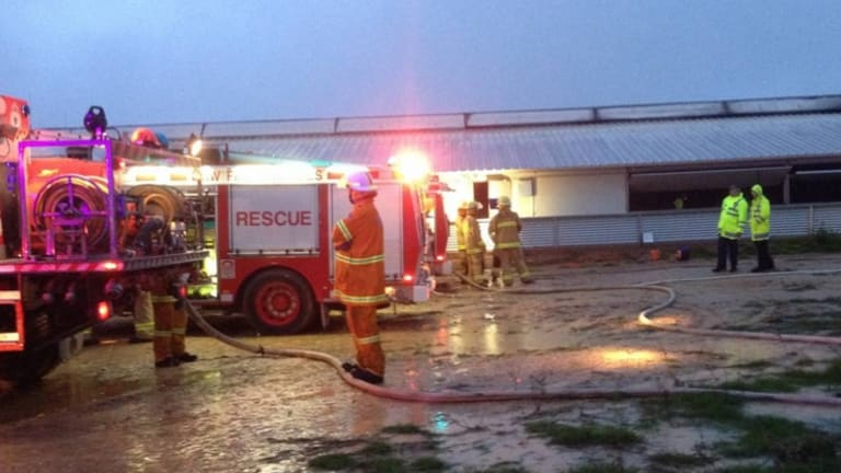 Firefighters battle a blaze at Wonga Piggery, in which about 2500 animals died.