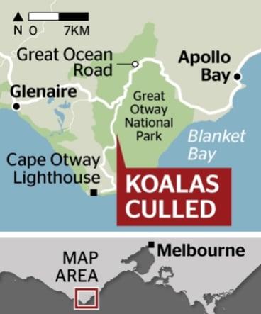 Where the koalas were culled.