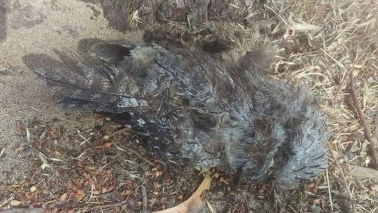 A dead owl witnesses said was found at the site.