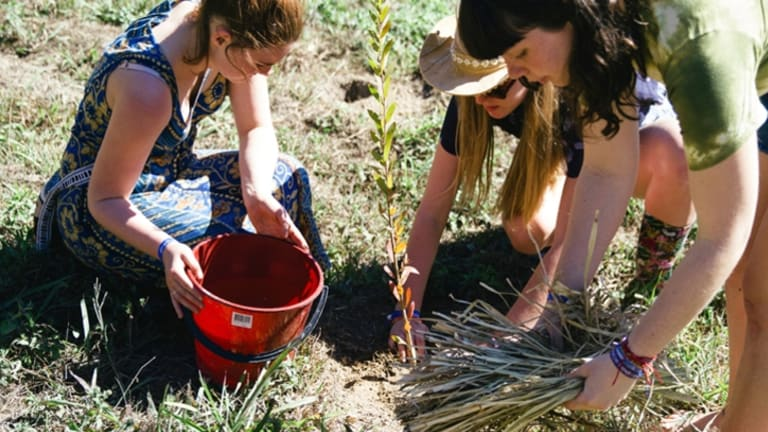 Tree planting at last year's Splendour in the Grass in Byron Bay.