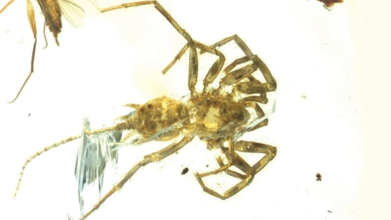 The Cretaceous arachnid Chimerarachne yingi, resembling a spider with a tail, was found trapped in amber in Myanmar after 100 million years.