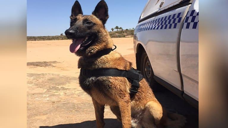 Police dog Maygar.