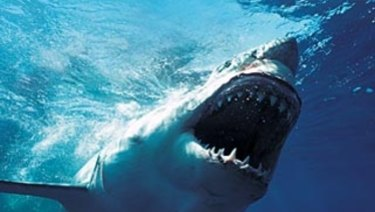 For the first time, the CSIRO has been able to put a number on the size of Australia's white shark population.