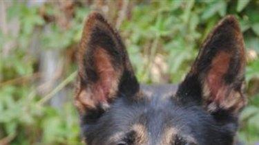 Police dog Freddie