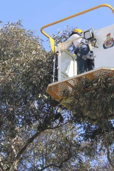 ACT emergency services crew rescue a magpie last month.