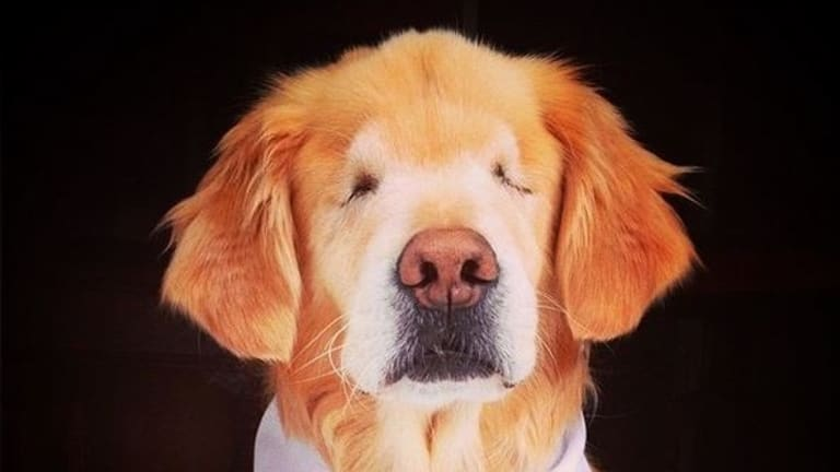 Meet Smiley, the blind dog who's a sight for sore eyes