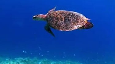 Google has taken its Street View concept to the Great Barrier Reef to mark World Oceans Day.