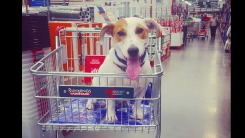 Bunnings backtracks on pet-friendly policy with new muzzle rule