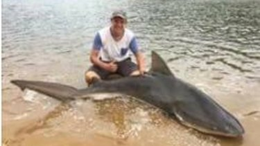 Georges Quick Auto Credit >> Shark caught in Georges River, prompting safety warning