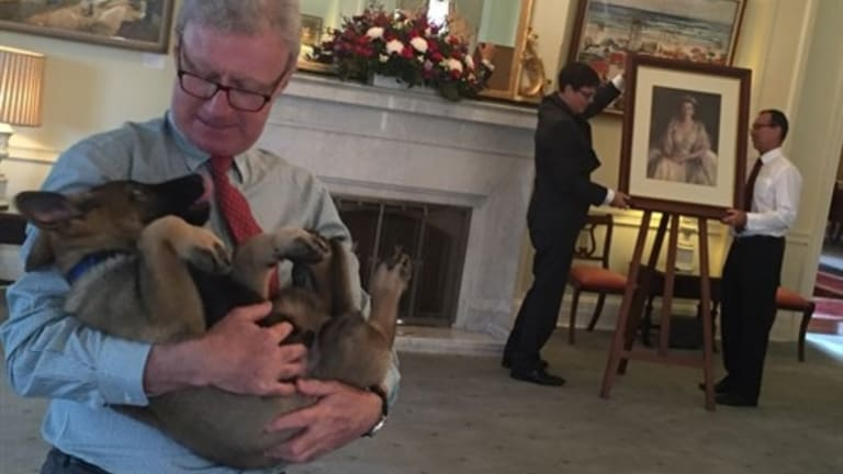 Gavel as a puppy enjoying a scruff with Queensland Governor Paul de Jersey.