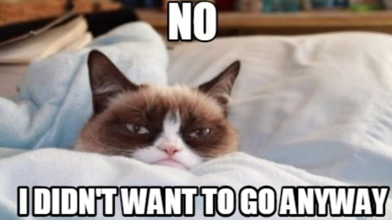 Grumpy Cat doesn't care if she has to stay home for the cat video festival.