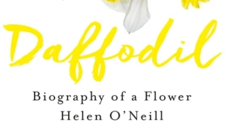 <i>Daffodil</i> by Helen O'Neill.