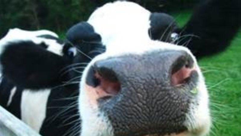 Australian dairy industry undergoing a supply chain revolution, says