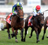 Peter O'Brien hopes Golden Rose can take Merchant Navy to the top of his list