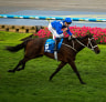 Winx poised to have another start at Flemington in Emirates Stakes