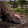 Photographer wins award for photo essay on rhino horn trade