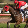 Redzel breaks track record in The Shorts as Chautauqua flashes home