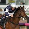 Jockey Damien Oliver confirmed for Almandin's back-to-back Melbourne Cup bid