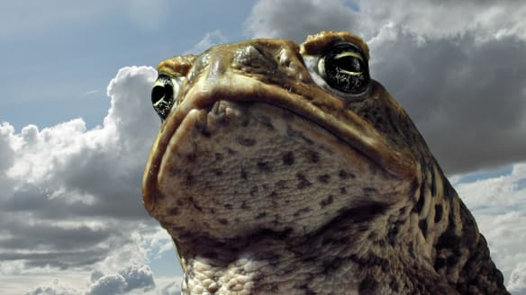 80 Facts to Mark 80 Years of Cane Toads