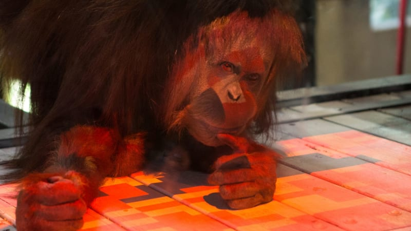 do non human primates have culture We are always trying to answer this question non-human primates have societies they recognize their relatives and behave differently toward their relatives than toward non-relatives.