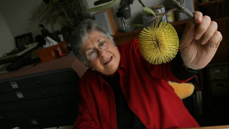 Banksia Lady review: Carolyn Landon paints a fine picture ...