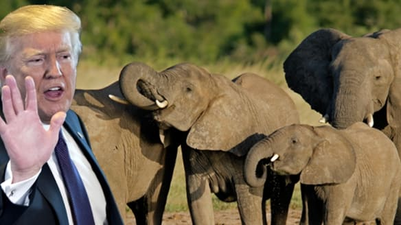 Donald Trump calls elephant hunting a 'horror show' after trophy import ruling