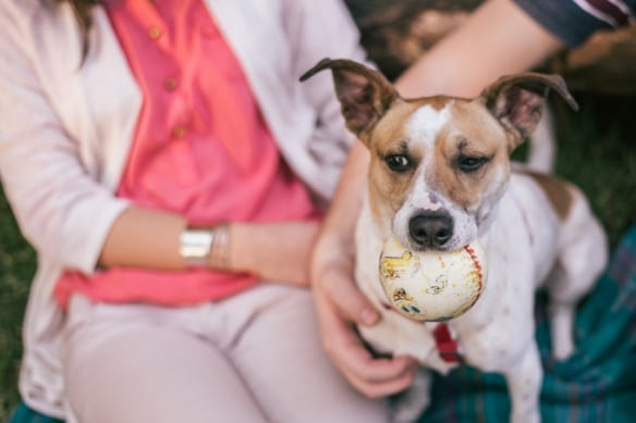 Sharing a pet together can teach couples a lot about their compatibility as future spouses.